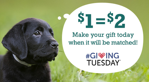 "Pictured to the right of a black Labrador retriever puppy is a thought bubble with the message ""One dollar equals two dollars.  Make your gift today