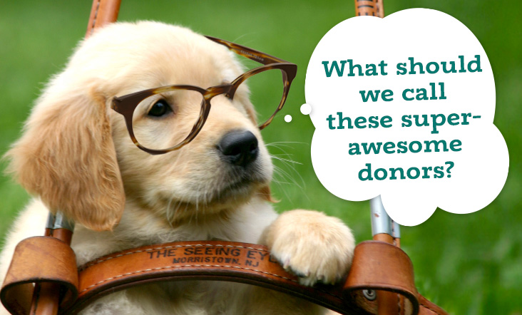 "A photo of a puppy wearing glasses and sitting in a harness. Caption reads: ""What should we call these super-awesome donors?"""