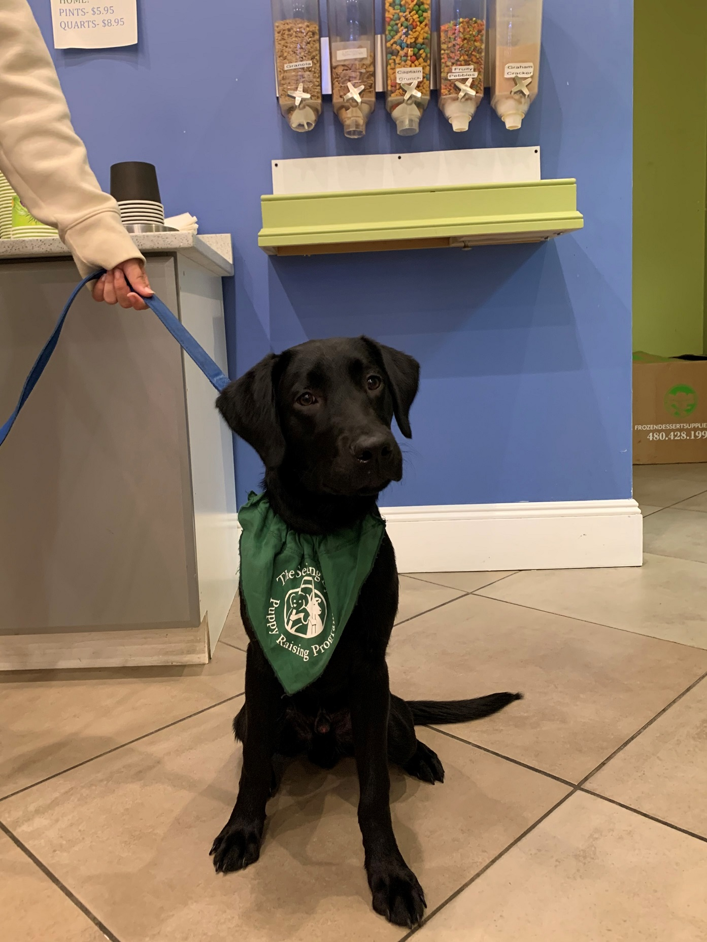 Hugh, a black Lab, sits before the toppings dispensers at a frozen yogurt shop.