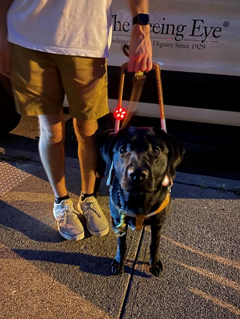 A black Lab looks up at the camera. Her handler, shown from the waist down, stands on the sidewalk beside her. The Seeing Eye van, which they just disembarked, is in the background. The dog has a small red light on her harness for safety since it's after dark.