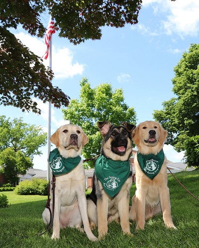 Three Seeing Eye puppies in training are shown in front of The Seeing Eye's main building in Morris Twp, N.J. They are seated beneath a flag pole with the American flag flying overhead. (from L to R) A yellow Lab, black and tan German Shepherd, and golden retriever sit shoulder-to-shoulder, staring proudly into the distance. They are all wearing green Seeing Eye puppy bandanas.