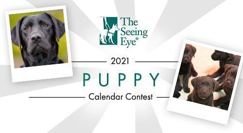 The Seeing Eye   It's 2021 Puppy Calendar Voting Time!