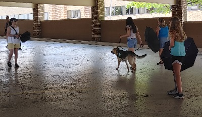 A German shepherd puppy and handler walk past three people positioned throughout the parking garage with umbrellas.
