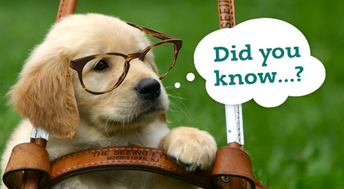 "A golden retriever puppy wearing glasses with a caption that reads, ""Did you know?"""