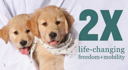 "Two golden retriever puppies peeking through a sheet, next to the headline: ""2X life changing freedom+mobility"""