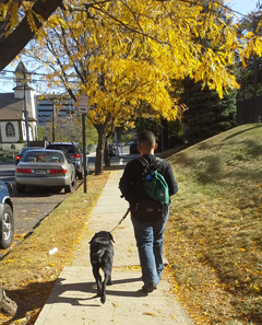 A young boy walks down a sidewalk with his black Lab puppy walking beside him. The pair is viewed walking briskly from behind, a branch of yellow fall leaves hangs above them and more yellow foliage is on the grass around them.