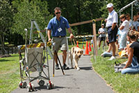 An instructor works with a yellow Labrador retriever around a barrier of cones and caution tape set up on a side walk.
