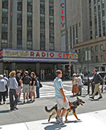 An instructor works a German shepherd down the sidewalk across from NYC's Radio City Music Hall.