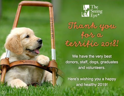 "A golden retriever puppy sits in the grass with his paw resting on a The Seeing Eye harness that is too big for him.  He'll be big enough one day!  Text ""Thank you for a terrific 2018! We have the very best donors, staff, dogs, graduates, and volunteers. Here's wishing you a happy and healthy 2019!"""