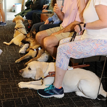 Three Seeing Eye dogs rest at their owners' feet while they listen to a presentation at The Seeing Eye.